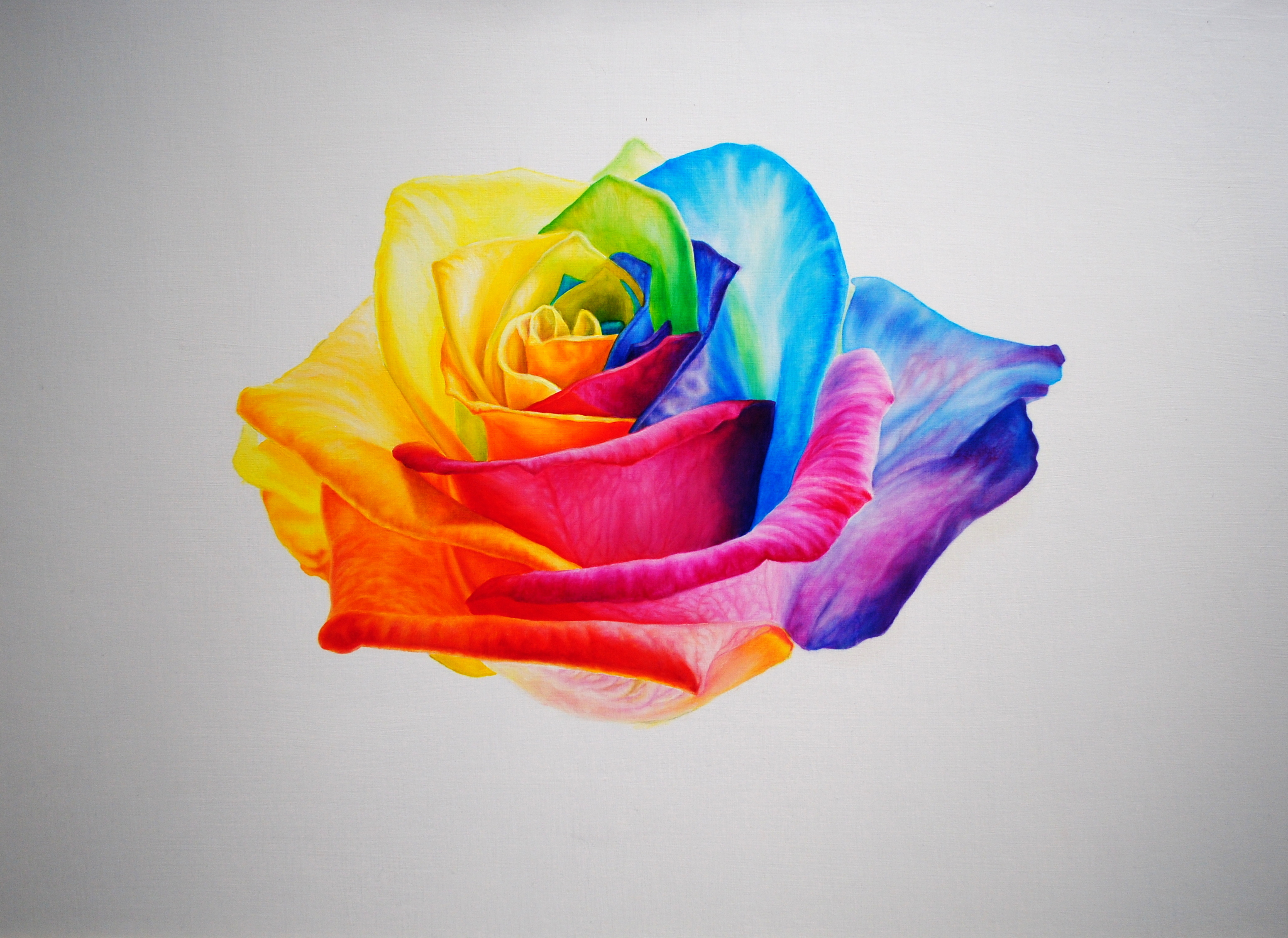 Rainbow rose samantha yallope for How much are rainbow roses